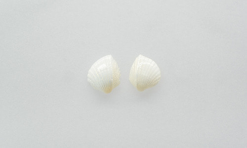 Angel wing shell earring