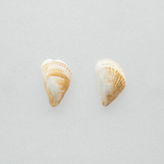 Fairy wing shell earring