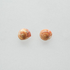 Red brown storm clam earring